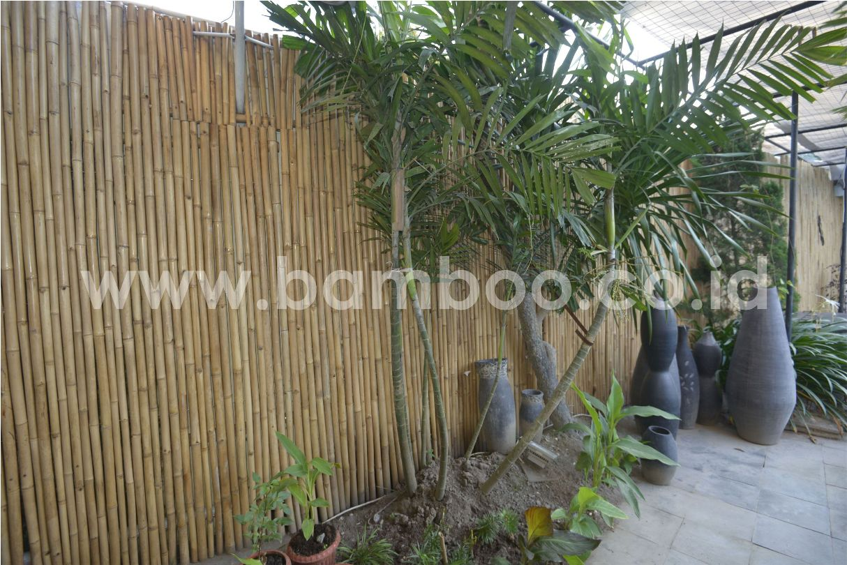 Natural Bamboo Fence Rolls Installation Bamboo