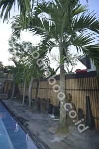 bamboo-06