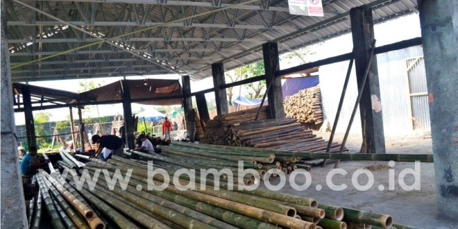 Bamboo Poles Processing Before Export